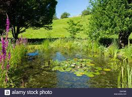 native aquatic plants uk garden ponds uk stock photos u0026 garden ponds uk stock images alamy