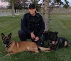 belgian shepherd edmonton canadian police canine association directors