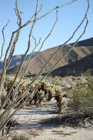 39 best anza borrego desert in san diego county ca images on