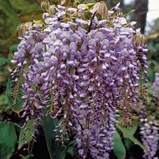 15 best climbing vine plants and vine plants identification my