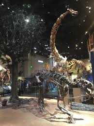 dinosaurs picture of perot museum of nature and science dallas