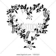 com content aboutflowers tropicalflowers bleeding heart vine