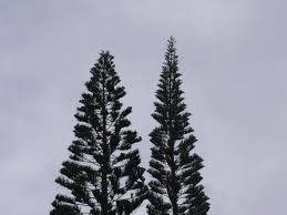 kawika huli wood a wood turner u0027s blog page 2