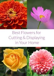 best flowers for cutting u0026 displaying in your home