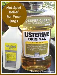 spot relief for your dogs pets pinterest dog doggies