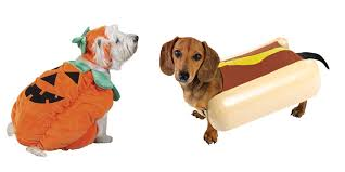 Halloween Costumes Dachshunds Ten Pre Fab Halloween Costumes Dogs Petmd