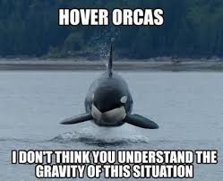 Whaling Meme - simple whaling meme i m in the water orca clone whaling on y all
