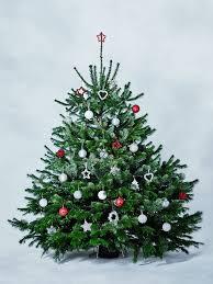 6ft british nordman fir christmas tree in stand waitrose florist