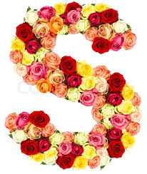 roses flowers s roses flower alphabet stock photo colourbox