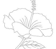 coloring pictures of hibiscus flowers hibiscus flower coloring pages hibiscus flower coloring page