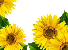 Summer Sunflowers Flower Sunflower Wallpapers Flowers Spring