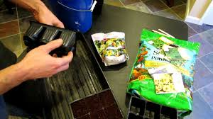starting seeds indoors perennial flower plugs for the vegetable