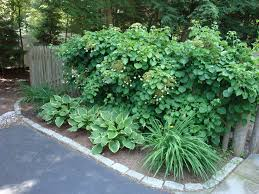 exterior design exciting stone fence for climbing hydrangea for