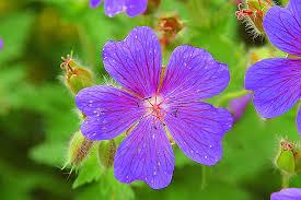 beautiful plants maybe the most beautiful plant by bavariangoassbeard on deviantart