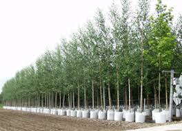 nursery trees agricultural marketing resource center