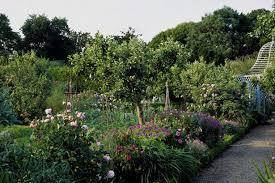 planning a beautiful mixed border for spring diarmuid gavin