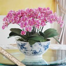 orchid centerpiece eclectic phalaenopsis orchid centerpiece winward home finest per