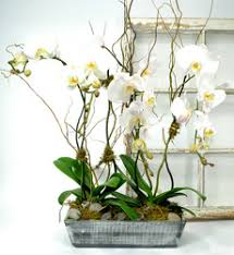 orchid delivery florist in dallas best flowers roses arrangements delivery