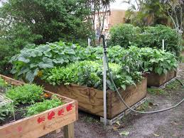 Florida Garden Ideas How To Grow A Vegetable Garden In Florida Home Outdoor Decoration