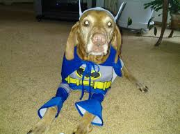 Vizsla Halloween Costume Batman U0027the Brave U0026 Bold U0027 Dog Halloween Costume