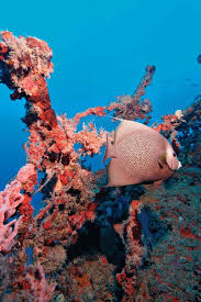 Distance From Diver Down Flag 25 Best Wreck Diving Spots In The U S Scuba Diving