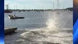 whale spotted cape cod harbor dies