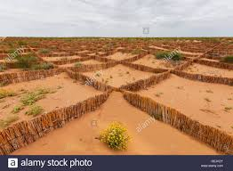 desert flowers and sand stoppers in the kyzylkum desert in stock