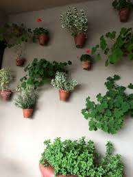 Wall Mounted Herb Garden by Make A Dull Wall Come Alive And Create More Space By Hanging