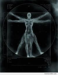 Xray Meme - x ray the vitruvian man by ben meme center