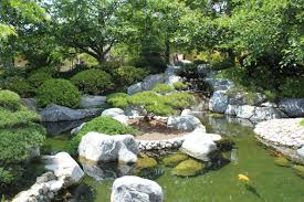 outdoor a garden with a fish pond and the rocks and then plant