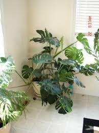 house plants u2026 u2013 rmstringer