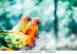 3 parrots stock images royalty free images u0026 vectors shutterstock
