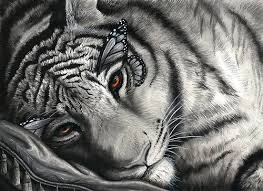 22 best future ink maybe images on tiger butterfly