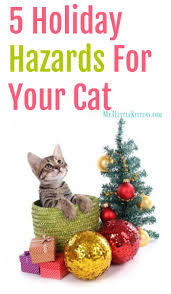 Cat Climbing Christmas Tree Video 2343 Best Cats Images On Pinterest Cats Homemade Cat Treats And