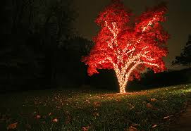 autumn tree lights pictures photos and images for