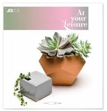 where to buy colorful succulents buy succulents sunshine and