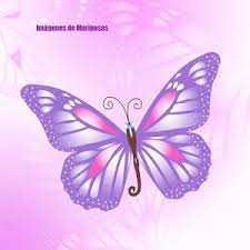 images of butterflies android apps on play