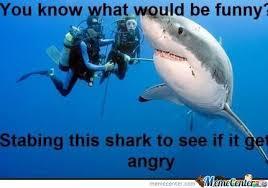 Funny Shark Meme - funny shark by beelzebub meme center