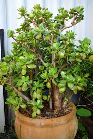 terracotta pots best 25 large terracotta pots ideas on pinterest formal gardens