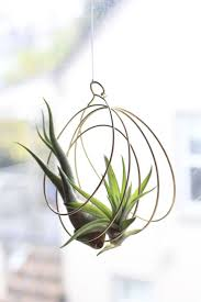 wall plant holders 19 best air plants images on pinterest air plants plants and
