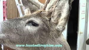 painting wt deer