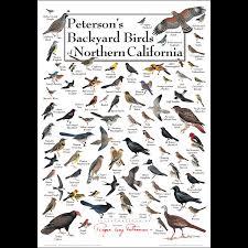 peterson u0027s backyard birds of northern california u2013 poster u2013 earth