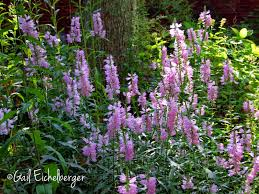 native plants for clay soil clay and limestone wildflower wednesday some plants like to