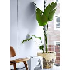 fresh and cool indoor plants decoration ideas for your home design
