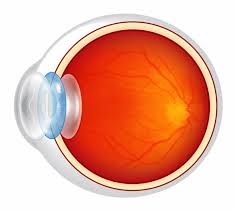 what causes eyes to be sensitive to light my eyes are sensitive to light and heat what does the doctor say