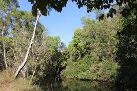 native plant network land management information land for wildlife top end