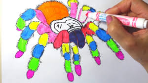 spider coloring pages for kids spider coloring pages youtube