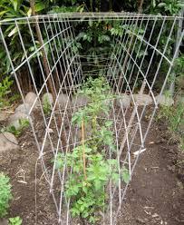 mosaic u0027s tomato cages mosaic gardens journal