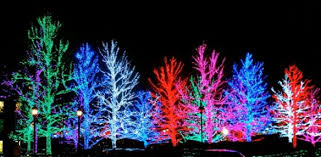on the hunt for light displays in the city dirt report