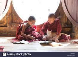 novice monks with cat studying at shwe yan pyay monastery stock